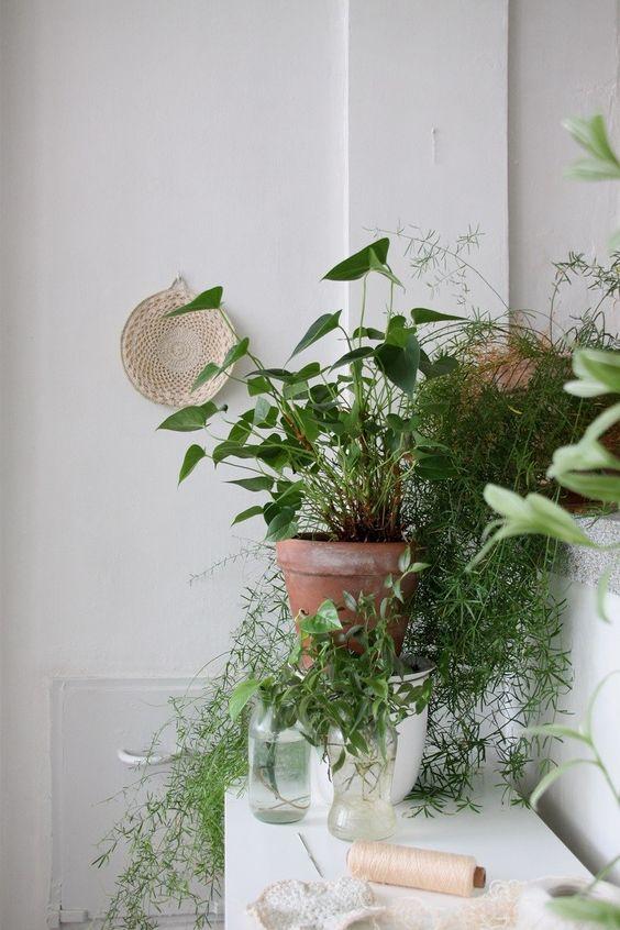 badkamerplant aglanema