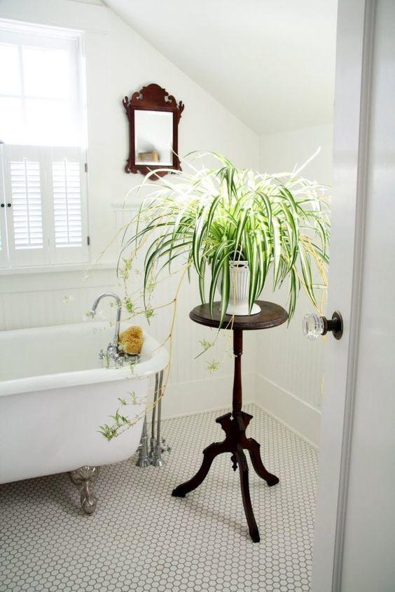 badkamerplant graslelie